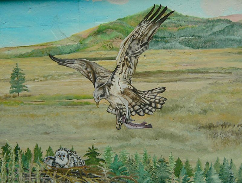 At Eagle Lake, a local artist painted a water tank with images of local avian activity, including an Osprey bringing food to its nestlings.