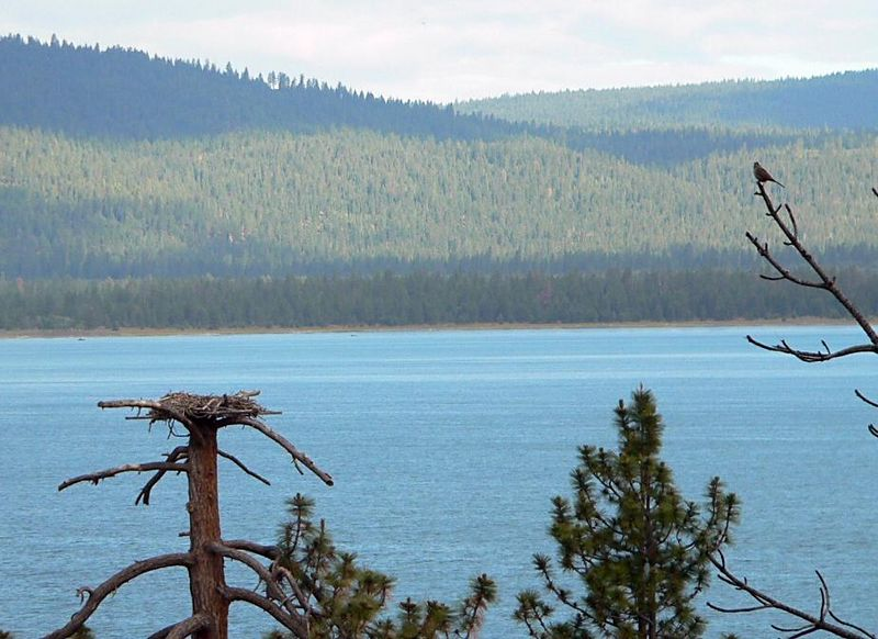 The Osprey nest and the far shore of Eagle Lake.