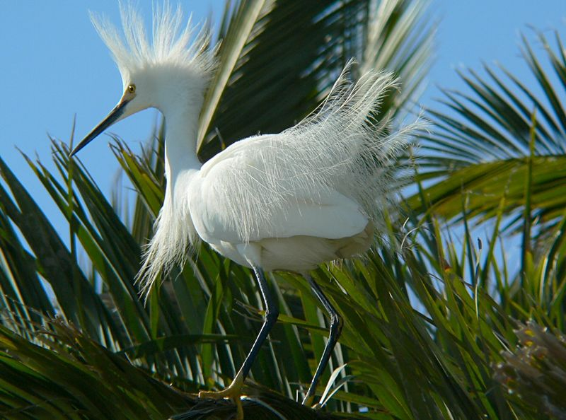 At the John Reed-styled Egret Hotel, Baylands Nature Preserve nr. Palo Alto, CA