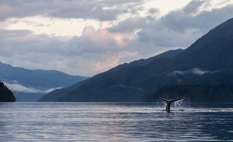 A Humpback Whale fluke in Klekane Inlet.