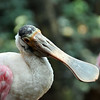 Tropical Bird- Buffalo Zoo