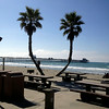 Palm Trees-Oceanside California