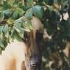 Sunnyside Kiwi - 4