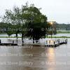 Rain Day, Lafayette, Louisiana 081216 017