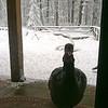Turkey at my front door ~ Uggs