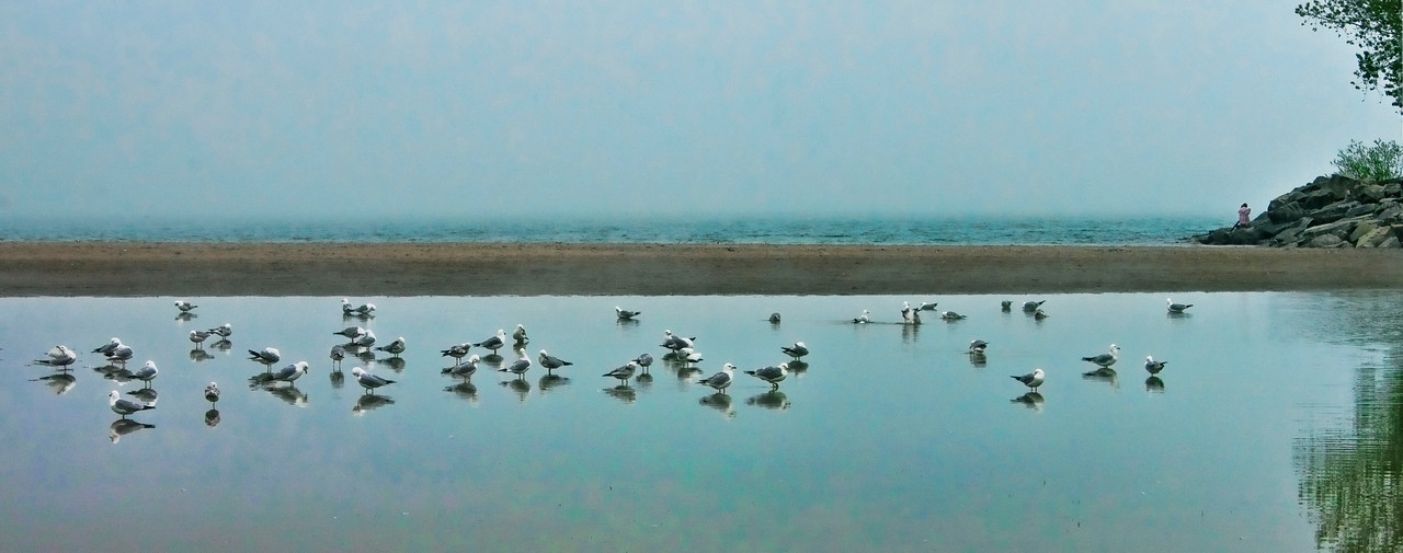 seagles at cherry beach