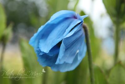 Flowers of Alaska