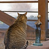 Foundry cat contemplates bronze.<br /> <br /> Shidoni foundry and gallery, Santa Fe, New Mexico