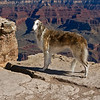 Is this where Thelma and Louise went over the edge?<br /> <br /> Fiona at the Grand Canyon - south rim.