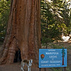 Not again... are there any giant squirrels?  <br /> <br /> Fiona in lower Yosemite.