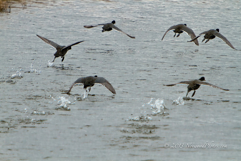 Old Coots Leaving Town