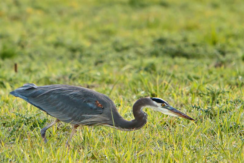 Ridgefield National Wildlife Refuge