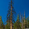 Colors are wonderful in the thin mountain air.<br /> <br /> Day 1 - Tuolumne Meadows Lodge to Vogelsang camp.