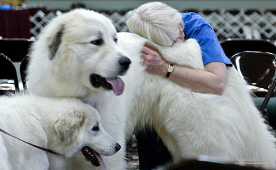Great Pyrs and Peers: The Community Of Gentle Giants