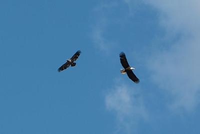 2016 Eagles-5645