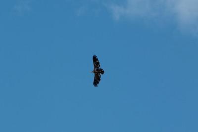 2016 Eagles-5635