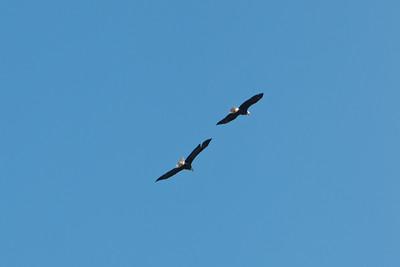 2016 Eagles-5652