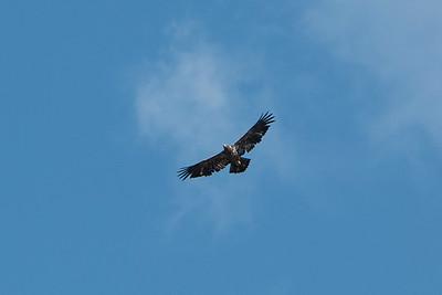 2016 Eagles-5643-3