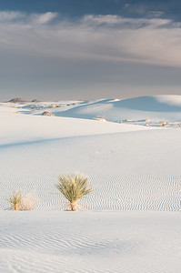 Late December on the dunes.  White Sands National Park, NM.