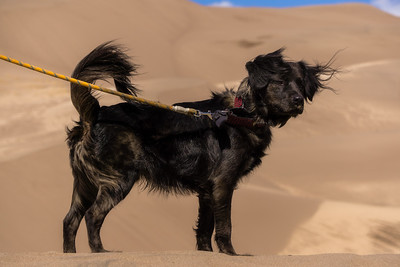 Dog Hiking in Sand Dunes