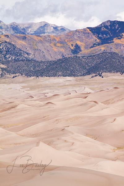 Aspens on the Sangre De Cristo Mountains, Colorado