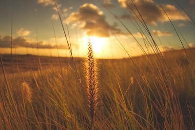 Golden hour Plains