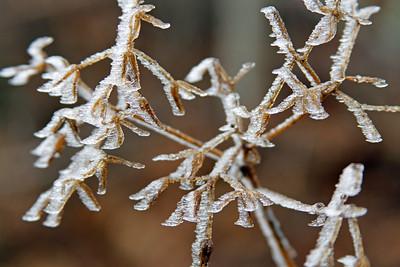 IcedTrees-025