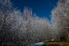 Hoar Frost & Snow Coated Trees at Newfound Gap