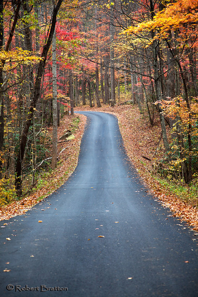 Roaring Fork Road Lined with Color