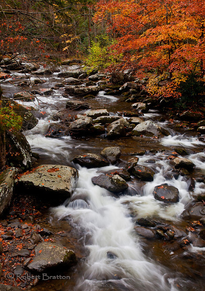 Maple Trees over the River Rapids
