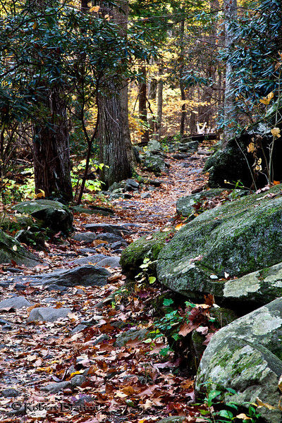 Trail at Roaring Fork