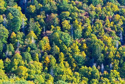 Early Fall Foliage