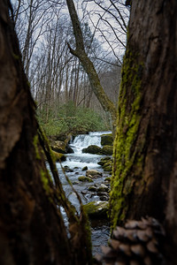 lynn prong cascades through the branches of a mossy tree