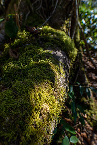 sunlit moss growing on the exposed roots of a tree