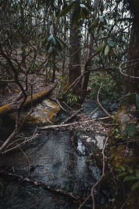 natural debris caught in a waterfall in the forest