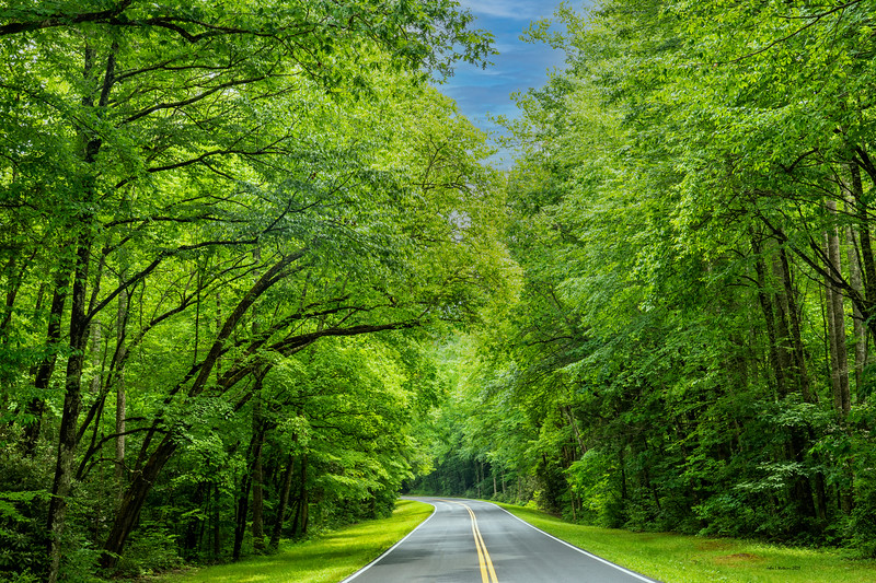 Main Road Through Great Smoky Mountains National Park