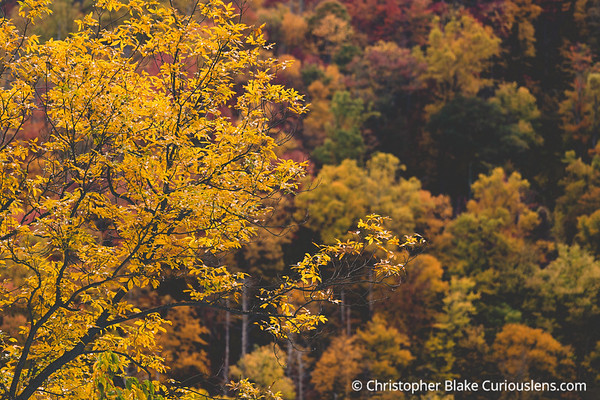 Colors of Fall - Smoky Mountains