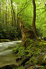 Middle Prong of the Little River - Great Smoky Mountains National Park - Sheldon Farwell - April 2010