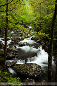 Green is the dominant color of spring along the Middle Prong of the Little River in the Tremont area of the Great Smoky Mountains. More shades of green than you can imagine.