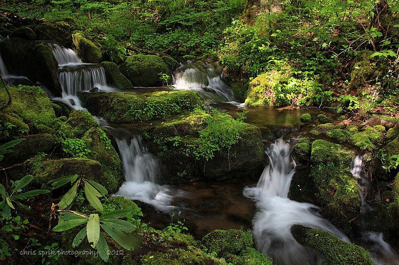 Mountain Stream- Great Smoky Mountains National Park - Chris Sprik - April 2012