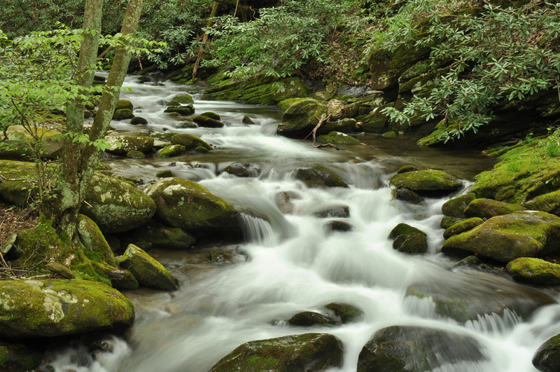 Small Smokies Stream - Great Smoky Mountains National Park - Mary Anderson - April 2011