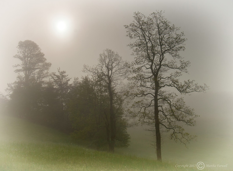 Foggy Cove - Cade's Cove - Great Smoky Mountains National Park - Marty Farwell - April 2010