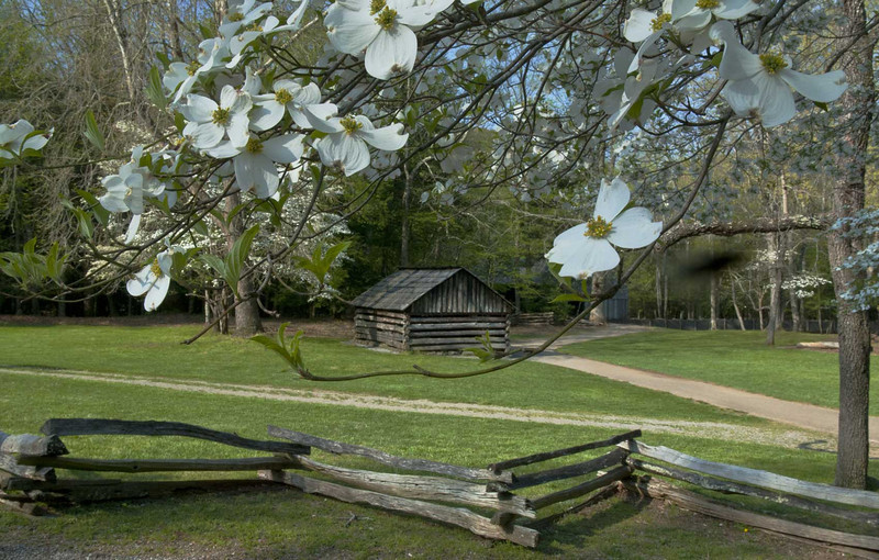 Spring Dogwoods in Cades Cove - Great Smoky Mountains National Park - Doug Beezley - April 2011