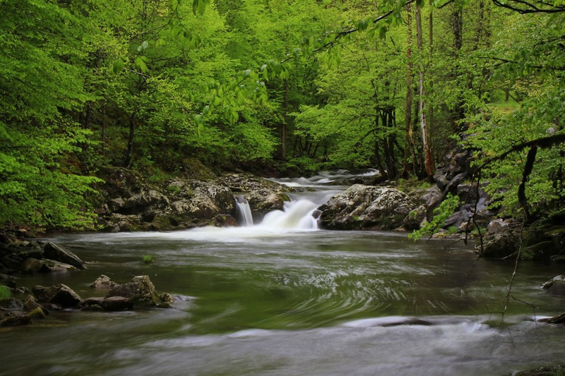 Mountain Stream - Great Smoky Mountains National Park - Sandy Reed - April 2012