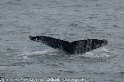 CRESLI Great South Channel 2010, humpback
