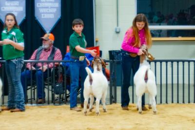 20190202_western_shootout_goats024