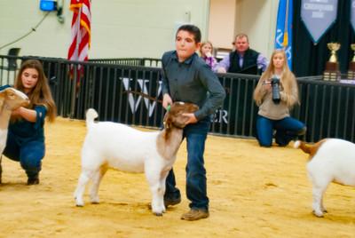 20190202_western_shootout_goats010