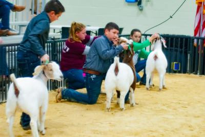 20190202_western_shootout_goats021