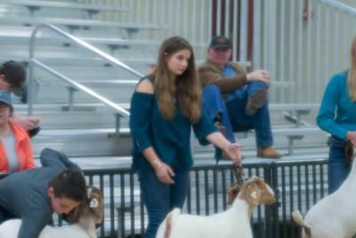 20190202_western_shootout_goats002