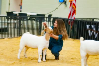 20190202_western_shootout_goats009